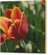 Tulip 11 Wood Print