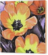 Tulip 16 Wood Print