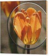 Tulip 1b Wood Print