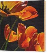 Tulip 38 Wood Print