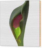 Tulip 4 Wood Print