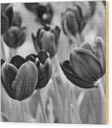 Tulip 84 Wood Print