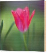 Tulip Amongst Wood Print