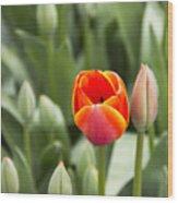 Tulip And Child Wood Print