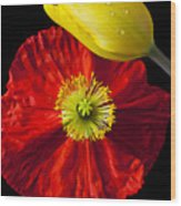 Tulip And Iceland Poppy Wood Print by Garry Gay