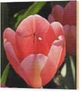 Tulip And The Crane Fly Wood Print
