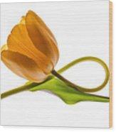 Tulip Art On White Background Wood Print