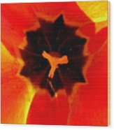 Tulip Art Wood Print
