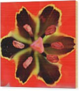 Tulip At Amatzia Forest - 4 Wood Print