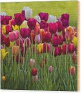 Tulip Bed  0117op Wood Print