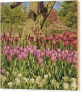Tulip Bed At Longwood Gardens In Pa Wood Print