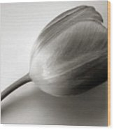 Tulip Black And White Wood Print