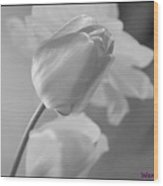 Tulip Black N White Wood Print