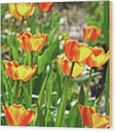 Tulip Bouquet Wood Print