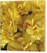 Tulip Bunching Wood Print
