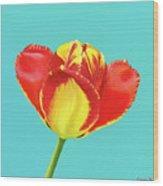 Tulip Burst Wood Print