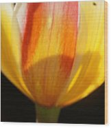 Tulip Calyx In Backlight 4 Wood Print