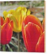 Tulip Celebration Wood Print by Karen Wiles