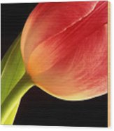 Tulip Close-up Wood Print