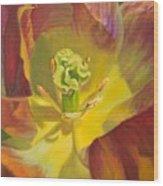 Tulip Closeup No. 1 Wood Print