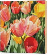 Tulip Crossing Wood Print