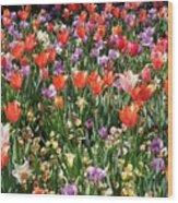 Tulip Delight 2 Wood Print