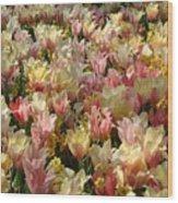 Tulip Delight 3 Wood Print