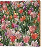 Tulip Delight 4 Wood Print