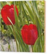 Tulip Duo Wood Print