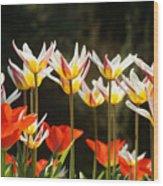Tulip Field 11 Wood Print