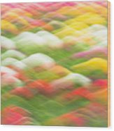 Tulip Field Abstract - Holland Michigan Wood Print
