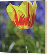 Tulip Flame Wood Print
