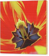 Tulip Flower Floral Art Print Red Yellow Tulips Baslee Troutman Wood Print