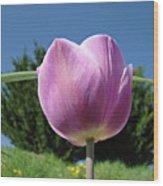 Tulip Flower Landscape Art Print Purple Tulips Baslee Wood Print