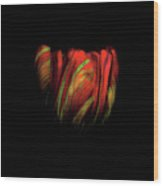 Tulip Flower On Black Background Abstract Wood Print