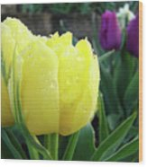 Tulip Flowers Artwork Tulips Art Prints 10 Floral Art Gardens Baslee Troutman Wood Print