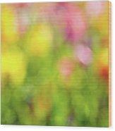 Tulip Flowers Field Blurred Defocused Background Wood Print