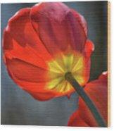 Tulip From Below Wood Print