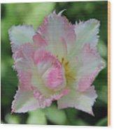 Tulip Galerie Wood Print