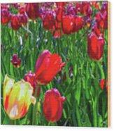 Tulip Garden In Bloom Wood Print