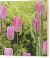 Tulip Garden Landscape Art Prints Pink Tulips Floral Baslee Troutman Wood Print