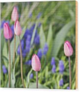 Tulip Garden Wood Print