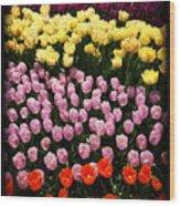 Tulip Greeting Card Wood Print