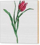 Tulip Illustration Wood Print