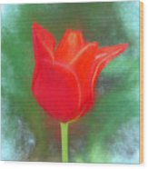 Tulip In Abstract. Wood Print