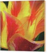 Tulip In Bloom Wood Print