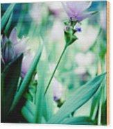 Tulip In Pastel Wood Print