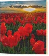 Tulip In Sunset Wood Print