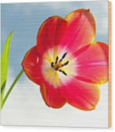 Tulip In The Sky Wood Print