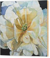Tulip Intimate Wood Print